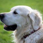 犬や猫も口内炎になる!原因と対策を知ろう