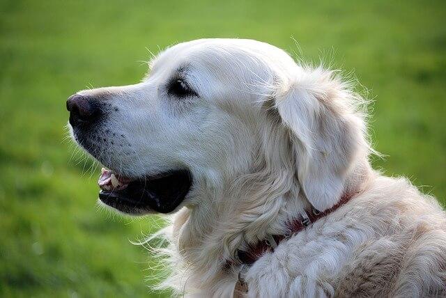 犬も口内炎